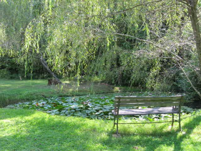 Lily Pond at the Otto Labyrinth Park