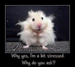feeling a bit stressed