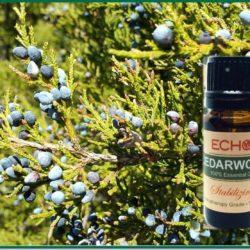 Echo Cedarwood Essential Oil at Mountain Valley Center
