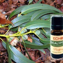 Echo Eucalyptus Essential Oil at Mountain Valley Center