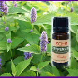 Echo Peppermint Essesntial Oil Mountain Valley Center